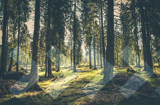 Raw Land Loan - Sun filtering through a trees to forest floor.