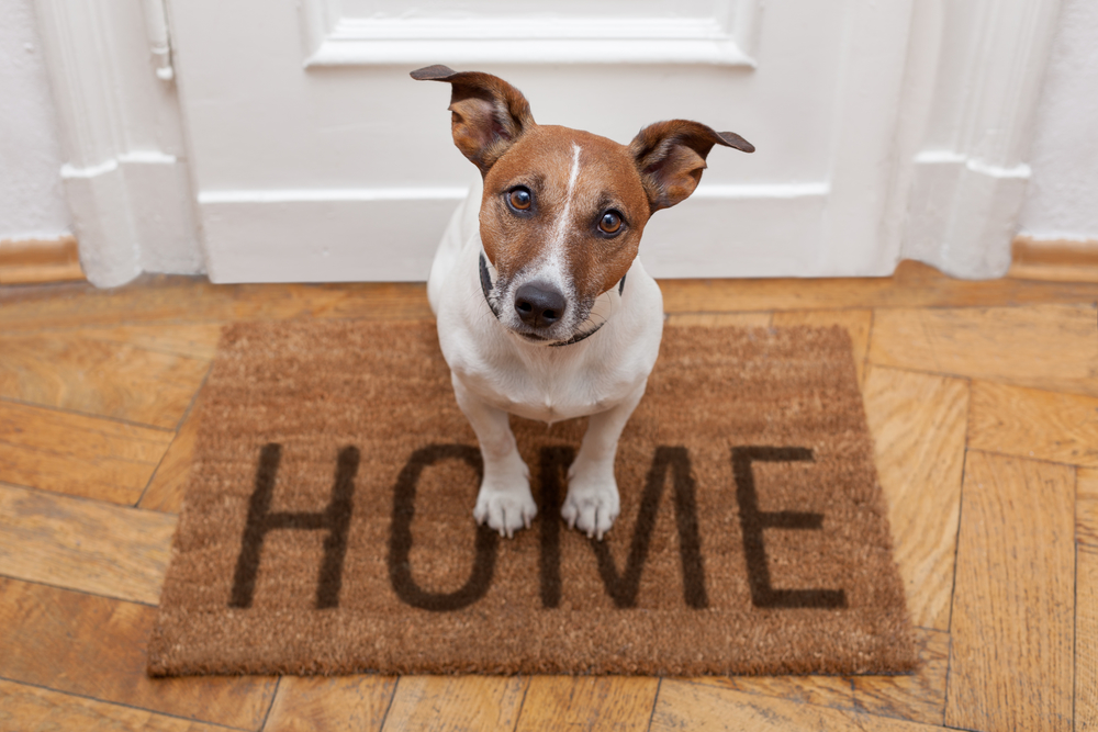 Image of dog sitting on a home doormat