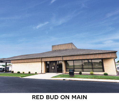 Red Bud On Main Branch